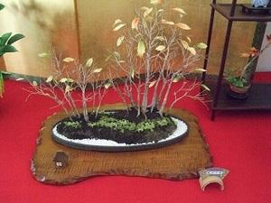 20100912_bonsai4_2