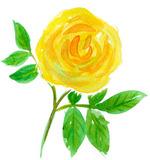 20101024_rose