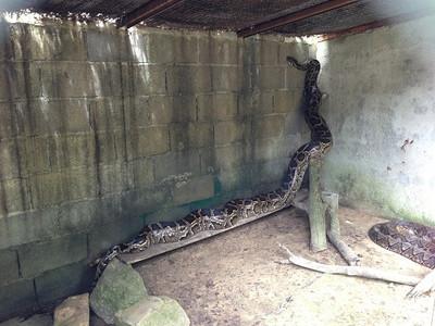 20130905_snake