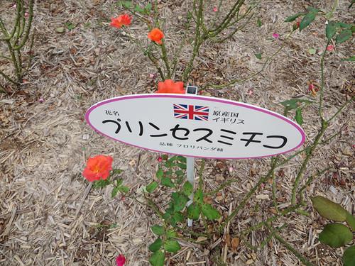 20151011_rose7