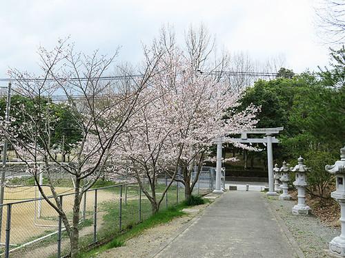 20160403_sanda_shi8