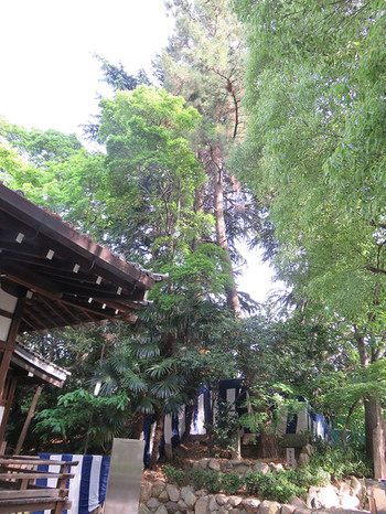 20160505_yasuishu10
